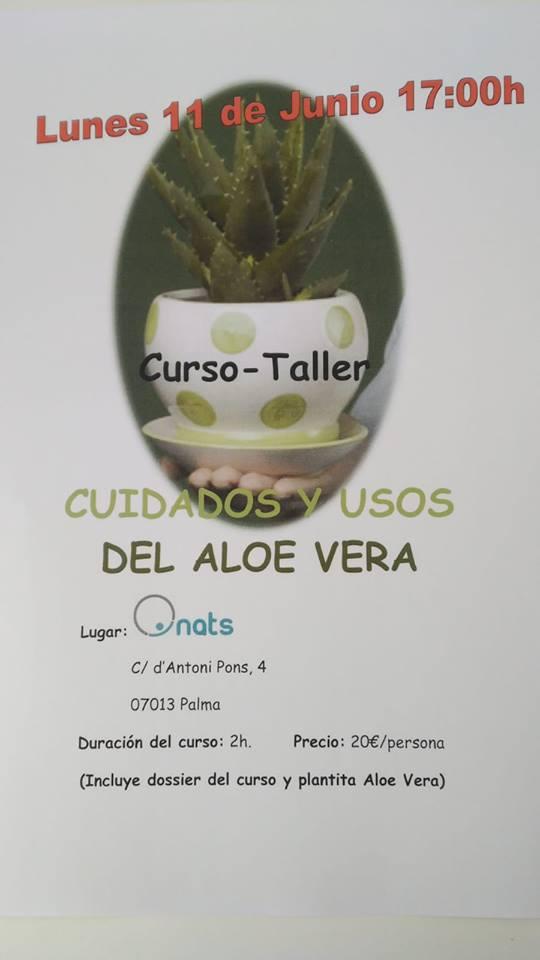 Taller Aloe Vera